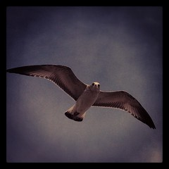 #ซีรีย์อัพรูปย้อนหลังก่อนลบออกจากมือถือ #iphoneography #iphone #bird #rochester #animal #jj #usa #freedom #iger
