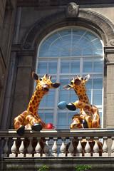 Helsink (FREDERICO MOREIRA!) Tags: voyage travel europa europe viagem janela alegria giraffe girafa finlandia ch sacada varanda fimdetarde pintas helsink finlande balco girafas balaustre chazinho janelo chdatarde fredericomoreira
