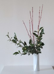 : Camellia (sui ()) Tags: white green japan camellia japaneseflowerarrangement