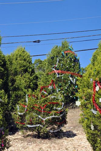 Trees_of_Loop_360_2013_158