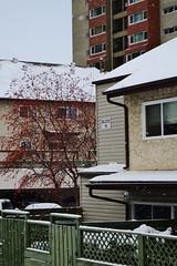 Winter in the Neighborhood (Vegan Butterfly) Tags: city winter urban snow buildings edmonton snowing