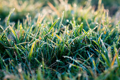 early light (Philipp Zieger - Thank you all for over 100.000 vi) Tags: morning light green grass sunrise licht frost gras grn waterdrops sonnenaufgang morgen wassertropfen