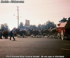 1964_Portland_Rose_Festival_40_Budweiser_Clydesdales (Hedrin) Tags: plaza beer rose festival portland wagon parade budweiser busch eastport clydesdale anheuser
