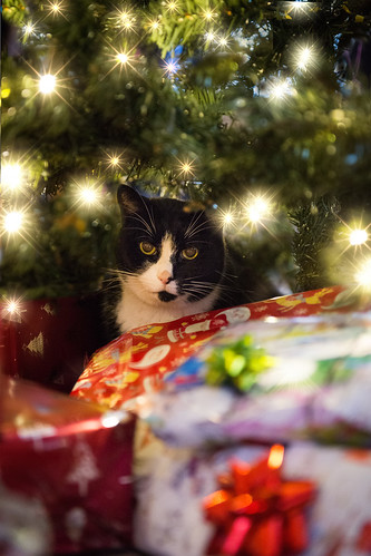 52/52 Under the Christmas Tree