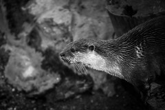 otter (riverteign) Tags: show park street old city uk trip travel family blue trees winter light sunset sea summer portrait england sky people urban blackandwhite bw music woman sun lake holiday black color tree london fall love film halloween me nature water girl car fashion festival rock night clouds vintage river garden landscape fun island photography zoo graffiti photo spring concert nikon europe raw photos live iphone iphoneography instagramapp