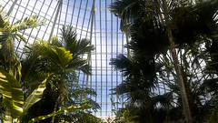 "Buffalo and Erie County Botanic Garden-Palm Dome • <a style=""font-size:0.8em;"" href=""http://www.flickr.com/photos/59137086@N08/12038749145/"" target=""_blank"">View on Flickr</a>"