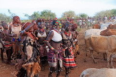 Hamer tribe bull jumping ceremony, Omo Valley, Ethopia (www.j-pics.info) Tags: africa girl face photography beads women gesicht faces kenya decoration explore afrika omovalley tradition ethiopia frau tribe schmuck mädchen hamer traditionell omo travelphotography gesichter ethopia turmi äthopien omoriver africanculture southernethiopia southethiopia omonationalpark tribeswomen körperschmuck dekaration ethiopiatribes bestprotraits tribalethiopia ethiopiaholidays africatradition eastafricatravel emergingdestination ethiopiavillages tribesomo