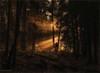 Jesteburg - Märchenwald (1) (Pana53) Tags: deutschland person see licht nikon wasser nebel laub sonne wald bäume fahrrad sonnenstrahlen wege mensch tannen wurzeln niedersachsen waldsee jesteburg märchenwald radler sportler büsche lichteinfall waldwege nikond800 truthandillusion pana53 nikon7100 photographedbypana53