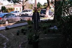 Johanna Keeps an Eye on Things (jjldickinson) Tags: plant garden landscaping longbeach wrigley olympusom1 droughttolerant xeriscaping fujicolorsuperiaxtra400 lawntogarden promastermcautozoommacro2870mmf2842 promasterspectrum772mmuv johannawoollcott roll490o2