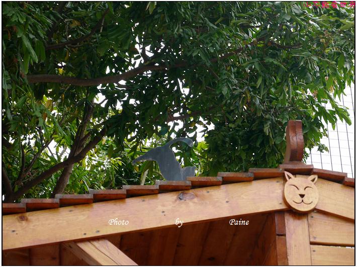 雲林虎尾屋頂上的貓 (33).JPG