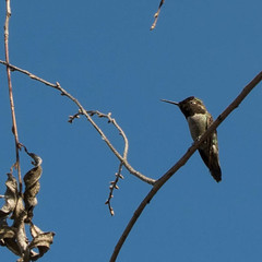 140309_3192.jpg (Weeding Wild Suburbia) Tags: park bird animal gardens publicgardens spnp