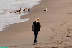 MalibuBeachBlonde (mcshots) Tags: ocean california sea usa beach water girl birds lady walking coast sand solitude afternoon view weekend stock babe malibu socal blonde sands mcshots springtime wahine losangelescounty