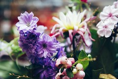 (Dreamlandstringer) Tags: flowers flower flora colorful europe explosion nederland happiness bloemen bloem boeket