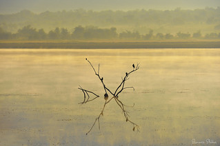 Misty morning at Mankwe Dam