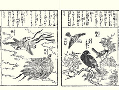 Sand pear, mythical bird, bird-of-paradise, Siberian rubythroat, common hill myna and Japanese robin (Japanese Flower and Bird Art) Tags: flower sand pear pyrus pyrifolia rosaceae bird birdofparadise paradisaea paradisaeidae siberian rubythroat luscinia calliope muscicapidae common hill myna gracula religiosa sturnidae robin erithacus akahige shusui shimokobe kano woodblock picture book japan japanese art readercollection