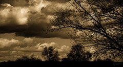 Clouds of golden (Coisroux) Tags: clouds thunder golden glowing silhouette countryside cambridgeshire alwalton darkness bright sunset dusk cloudscape dreams fluffy skies horizon glimmering ominous nikond