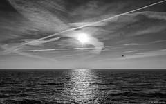 Free as a bird (koos.dewit) Tags: 2017 bw friesland fuji fujixt2 fujifilm fujinonxf1024mm holland ijsselmeer koosdewit thenetherlands zw afsluitdijk bird blackwhite clouds koosdewitnl landscape reflections sea seascape sun sunrays sunrise water