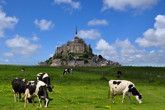 Le Mont Saint-Michel, Normandie - France (natureloving) Tags: lemontsaintmichel thesaintmichelmount normandie normandy france cow landscape nature natureloving nikon d90