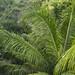 Panama Rainforest Discovery Center gamboa panama pandemonio 2017 - 03