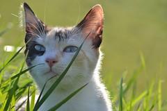 (blancaelena_muizmartinez) Tags: gato gatos mascota mascotas pet pets