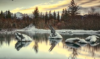 Stumps at Vermillion Lakes Banff