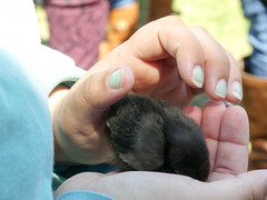 P1090924 (MilesBJordan) Tags: bird birds chick human humans batonrouge lsu lsutigers kangaroo australia baby animal animals