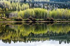 reflecting trees.IMGP7745 (candysantacruz) Tags: wyoming spring grandtetonnationalpark trees reflection