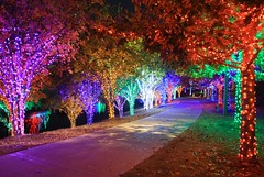 Cristmas Alley in Vitruvian Park (Leon Match) Tags: vitruvianpark christmas