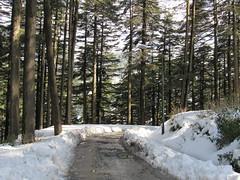 Jammu Trip (MusafirSamir.) Tags: jammu jammukashmir kashmir jk vaishnodevi katra jammumarket patnitop mansar jaimatadi jaimaavaishnodevi raghunathtemple bagheebohu traintriptokatra sureinsar snowfall olay oley hillview hillside trecking