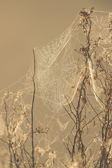 Dew on the Web (dngovoni) Tags: closeup florida fog orlandowetlands water webs christmas unitedstates us