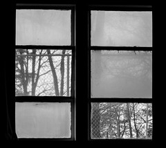 """Looking Out The School Window""; Long Island, New York (hogophotoNY) Tags: hogophoto window school bw blackwhite nikon nikonp900 p900 nikondigital hogo usa us longislandny nystate branches branch windows"