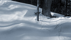 Trail Shadows (Ross G. Williams) Tags: fingerlakestrail northcountrytrail watkinsglen snow snowscape landscape tracks hiking backpacking