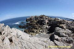 Pacific Grove (Narwal) Tags: pacificgrove california ca usa 美國 加州 太平洋叢林 canon fisheye lens 15mm 魚眼 鏡頭