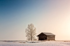 Barn And Birch Under The Spring Sky (k009034) Tags: 500px winter copy space finland matkaniva oulainen tranquil scene architecture barn birch countryside fields landscape morning nature no people rural sky snow trees teamcanon