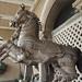 Taj Horses