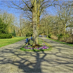 Spring in Shadows thumbnail