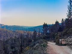 Apr17_22_Ektar_BessaI_9 (jamin.sandler) Tags: ektar voigtlanderbessai halfframe eintayyasim