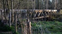 Schwienswei 3 (conrad.seegers) Tags: brug brucke houten holzbrucke ochtend