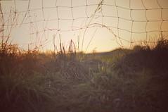 The great escape (Bilderwense) Tags: natur nature dof shallow depth depthoffield tiefenunschärfe tiefenschärfe outdoor nikkor 50mm f18 nikon d5000 bokehrama bokeh smooth soft bokehlicious schärfentiefe verschwommen serene vignetting heiter frühling spring sunset sundown dusk dawn dämmerung sonnenuntergang sonnenaufgang zaun fence hff fencefriday