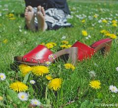 Commencer La Saison Du Bon Pied (Photography Christophe.H) Tags: pieds chaussure feet foot toe sole printemps shoe mule talon fleur flower grass herbe nature reflex canon 700d 1855mm 1855 piedi pies füse