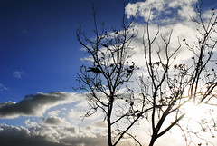 (Vindeca Raine) Tags: photography nature trees landscapes italy sardegna cagliari birds crows sky bluesky clouds