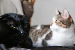 Stories Like Ours (Monaggio) Tags: cat gato animal blanco white negro black stupid rayas