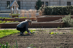 20170405-AMS-LSC-2148 (USDAgov) Tags: usda departmentofagriculture usdepartmentofagriculture peoplesgarden nationalmall washington dc planting seed sprout tools soil garden transplant plant align spring coolweather