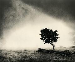 Tree in Fog .2 (terra_monk) Tags: lith darkroom