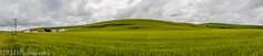 NT3.0033-CW1605618_38626-Pano (LDELD) Tags: palouse uniontown washington unitedstates us wheat spring green
