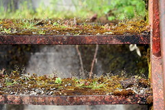 Abandoned in Mohawk, OR (dsgetch) Tags: abandoned mohawk mohawkoregon oregonabandoned decay beautifuldecay abandonedbuildings abandonedpnw pnw cascadia oregon marcola rust rusty moss mossy concrete cascades abandonedrural urbex stairs rustystairs mossystairs