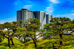 "View ""Kachidoki The Tower"" from Hama-rikyu Gardens : 浜離宮庭園より勝どきタワーの展望 (Dakiny) Tags: 2017 spring april japan tokyo chuo chuoward park garden hamarikyugardens city street outdoor lanscape architecture japanesearchitecture nikon d7000 sigma 1770mm f284 dc macro os hsm sigma1770mmf284dcmacrooshsm nikonclubit"