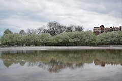 Spring snow (marensr) Tags: trees flowering branches blooms reflection puddle water hyde park chicago cloudy sky clouds approaching storm