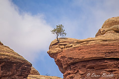 Will it stand the test of time (littlebiddle) Tags: canyonlandsnationalpark rocks scenicsnotjustlandscapes scenic utah