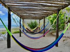 Version 2 Uvas Beach Cozumel Mexico April 2017 (bermudafan8) Tags: 2017 spring break bermudafan8 cozumel mexico uvas
